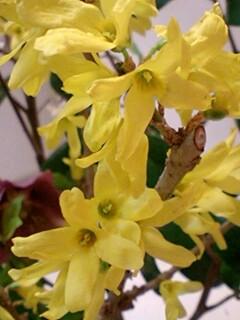 20090331flower4.jpg