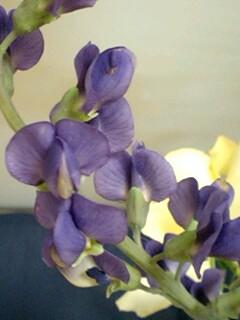 20090527flower6.jpg