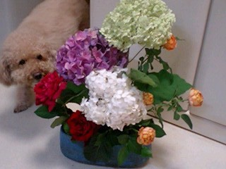 20090701flower1.jpg
