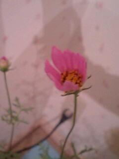 20090909flower1.jpg