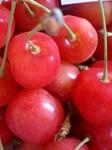 cherryー52.jpg