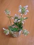 flower06071.jpg