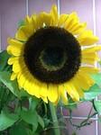 flower07081.jpg