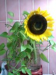 flower07082.jpg