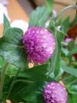 flower10023.jpg
