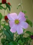 flower10162.jpg