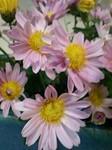 flower11042.jpg