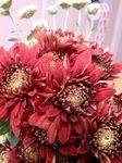 flower11151.jpg
