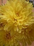 flower11212.jpg