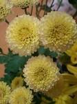 flower11213.jpg