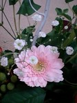 flower12064.jpg
