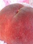 peach2.jpg