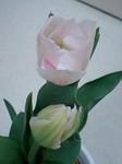 tulip4.jpg