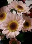 0911flower2.jpg