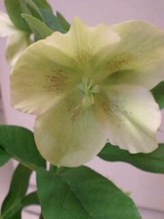 20090428flower2.jpg
