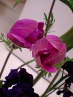 20090428flower3.jpg