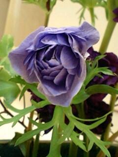 20090428flower4.jpg