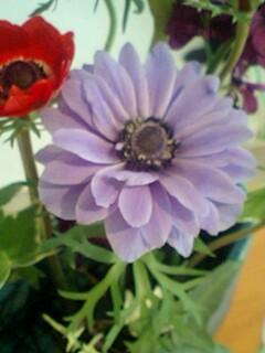 20090428flower5.jpg