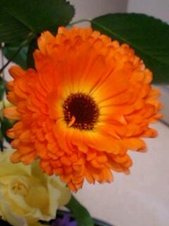 20090520flower4.jpg