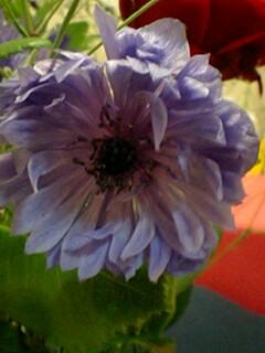 20090527flower5.jpg
