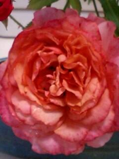 20090603flower1.jpg