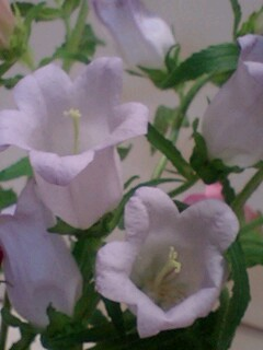 20090603flower3.jpg