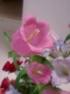 20090603flower4.jpg