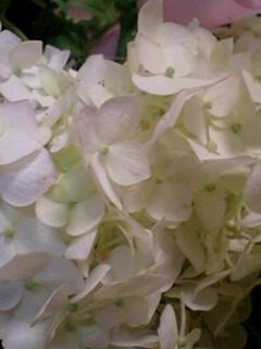 20090609flower2.jpg