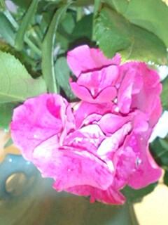 20090609flower4.jpg