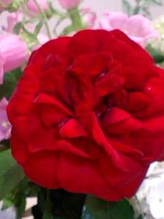 20090609flower5.jpg