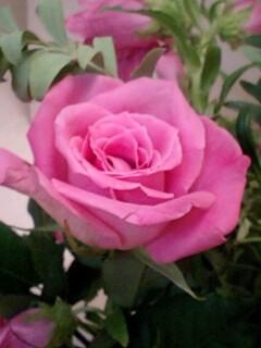 20090612flower2.jpg