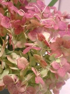 20090714flower4.jpg