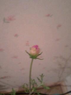 20090909flower2.jpg