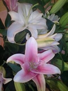 20091112flower2.jpg