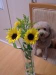 flower06281.jpg