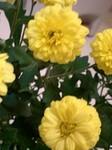 flower10224.jpg