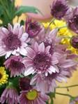 flower11063.jpg