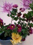 flower12042.jpg