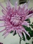 flower12043.jpg