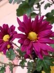 flower12044.jpg