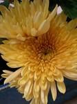 flower12045.jpg