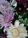 flower12192.jpg