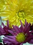flower12193.jpg